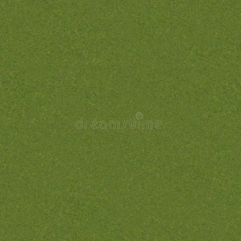 трава реальная стоковое изображение rf