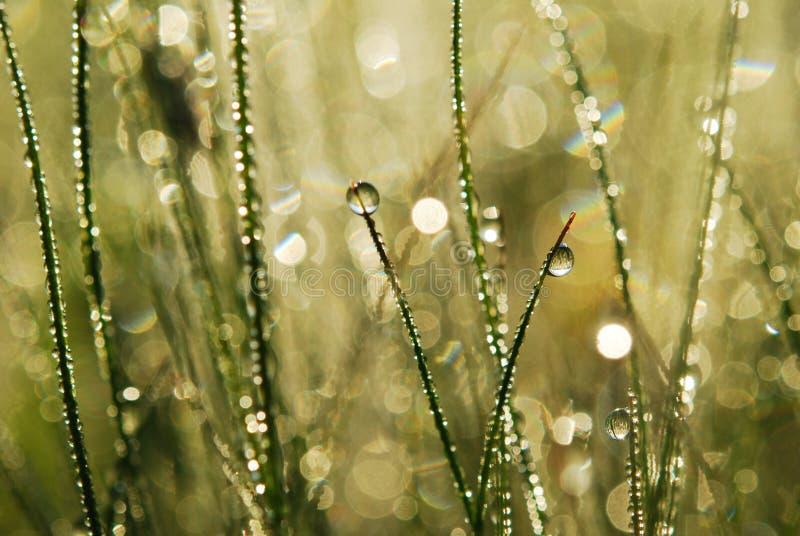 трава росы стоковое фото