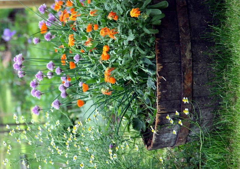 трава сада стоковая фотография