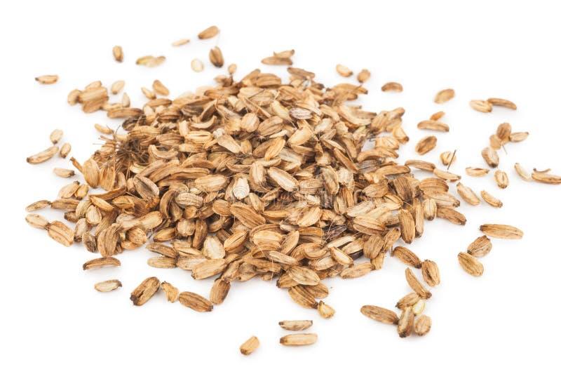 Трава семени дягиля стоковое изображение