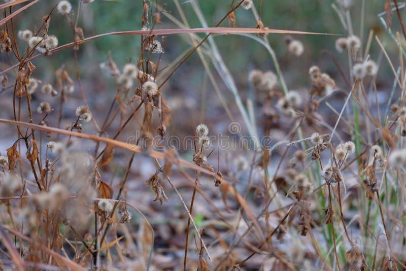 Трава сена стоковые изображения