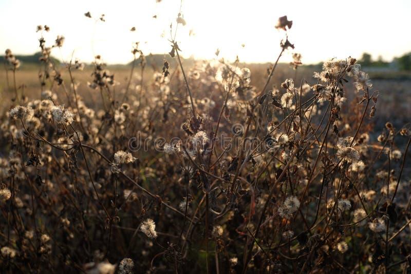 Трава сена стоковая фотография