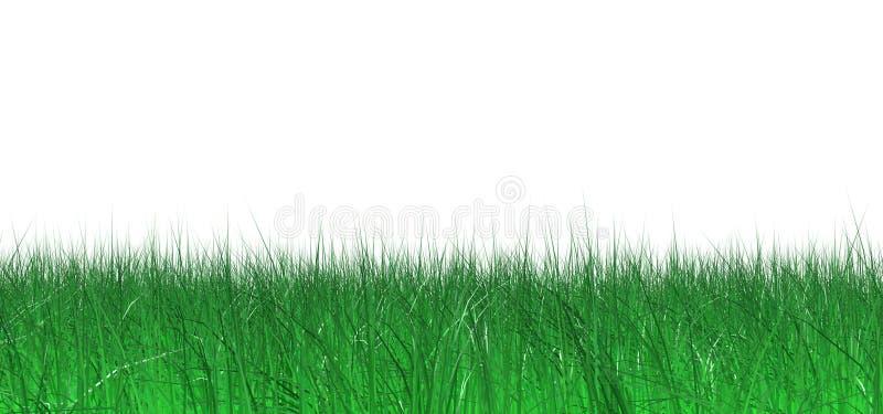трава сочная бесплатная иллюстрация