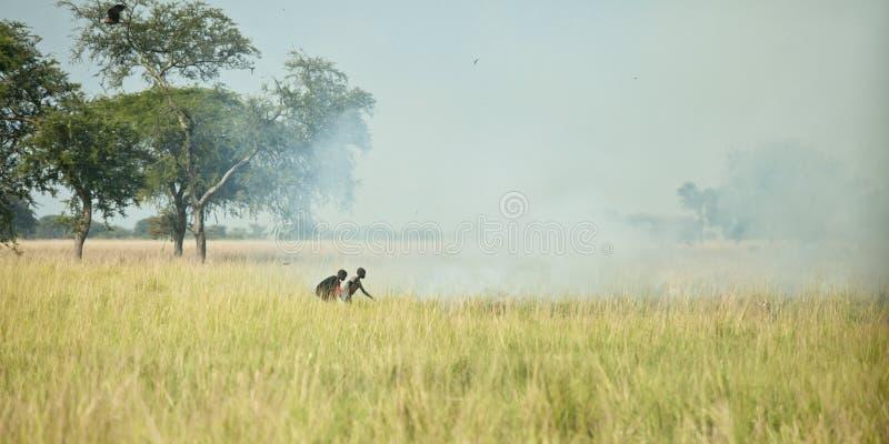трава Судан пожара стоковые изображения