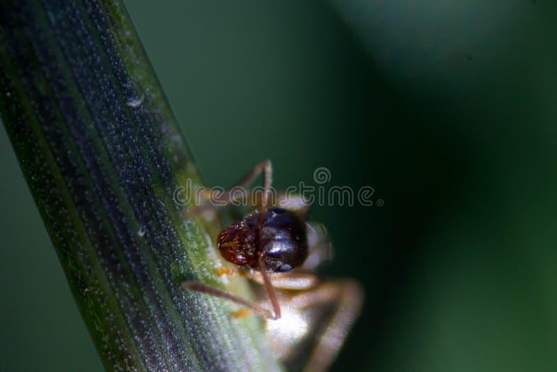 Трава с муравьем стоковое фото rf