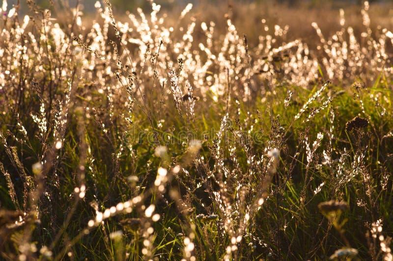 Трава с падениями росы стоковая фотография