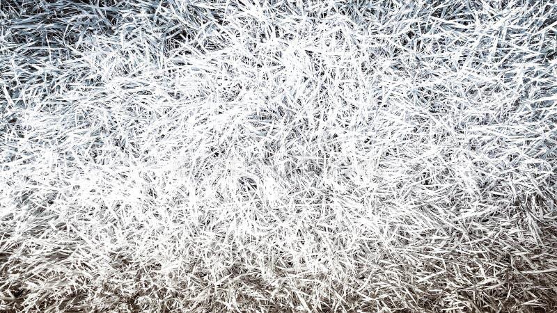 Трава текстурирует поверхностный monochrome предпосылки стоковые изображения