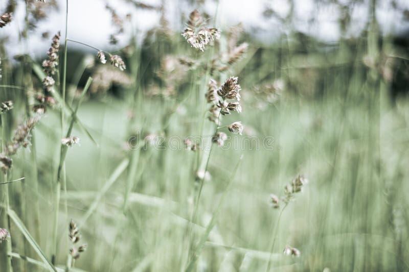 Трава луга лета стоковые фото