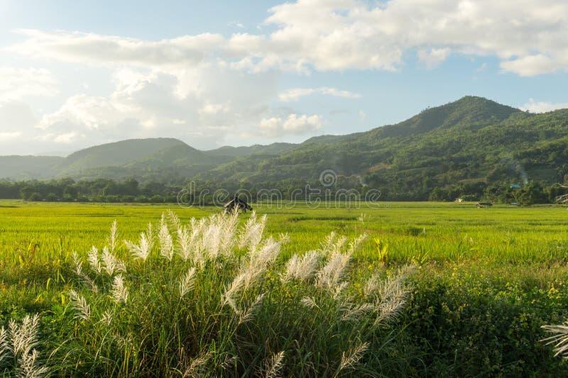 Download Трава луга с взглядом поля и природы риса Стоковое Изображение - изображение насчитывающей green, ландшафт: 81815197