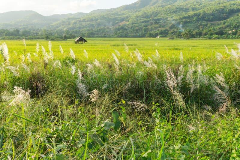 Download Трава луга с взглядом поля и природы риса Стоковое Изображение - изображение насчитывающей страна, естественно: 81815323