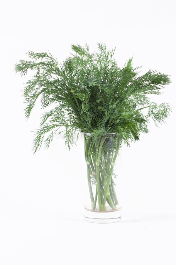 трава укропа свежая стоковые изображения rf