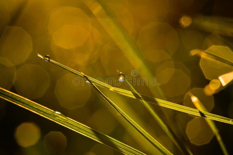 Трава утра стоковая фотография