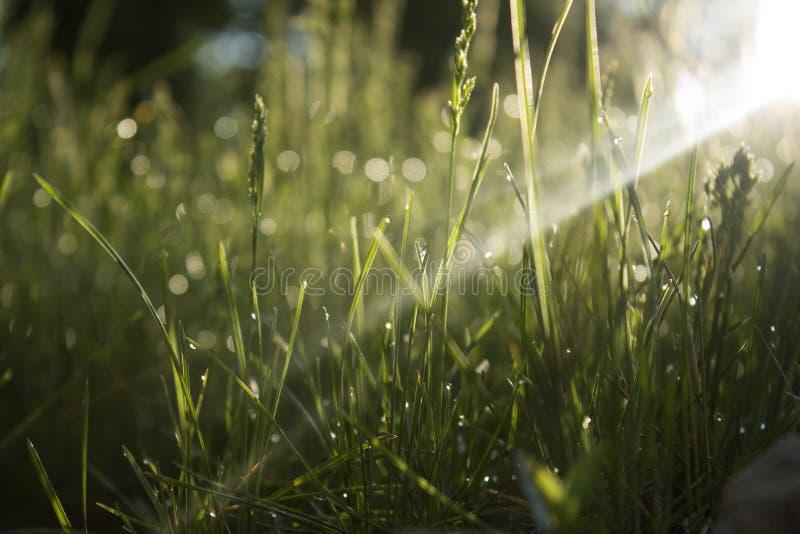Трава утра стоковое фото rf