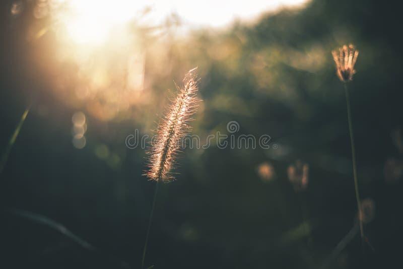 Трава цветка в саде и восход солнца в утре стоковые фото