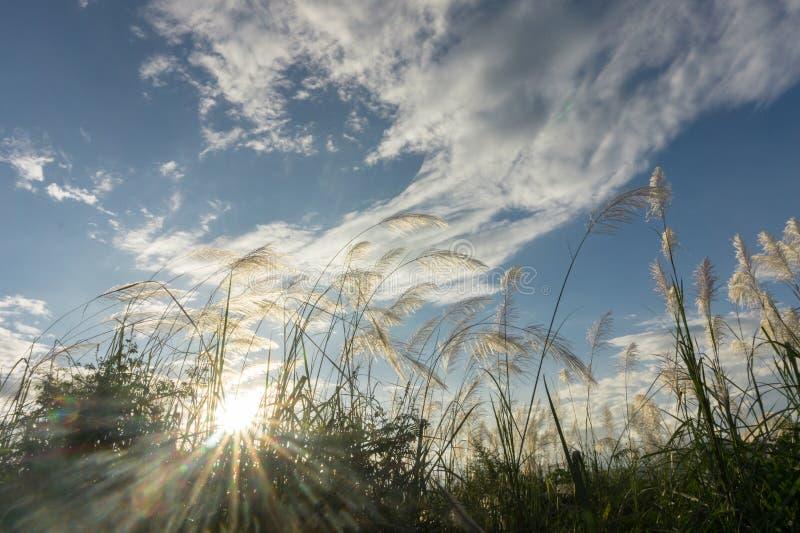 Download Трава цветка луга в внешней природе Стоковое Изображение - изображение насчитывающей лужок, ферма: 81814767