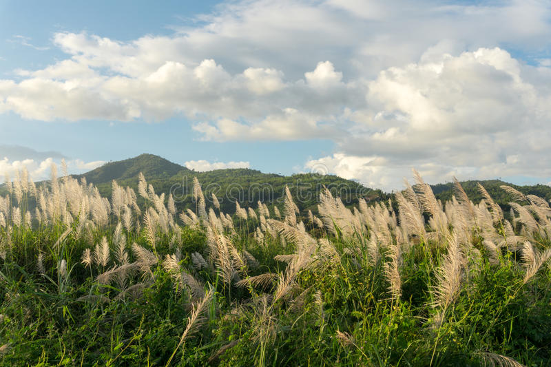 Download Трава цветка луга в внешней природе Стоковое Фото - изображение насчитывающей лужок, облако: 81814932