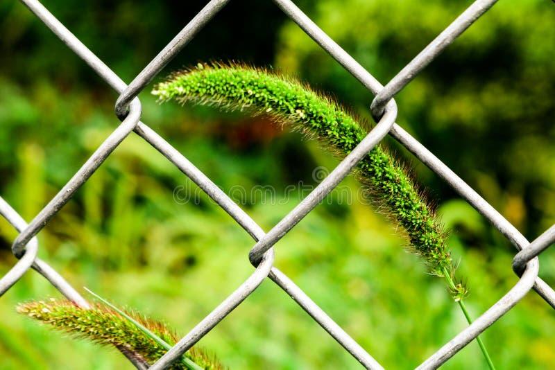 Трава через загородку стоковая фотография