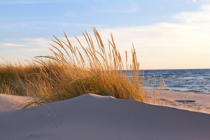 Трава дюны осени стоковая фотография