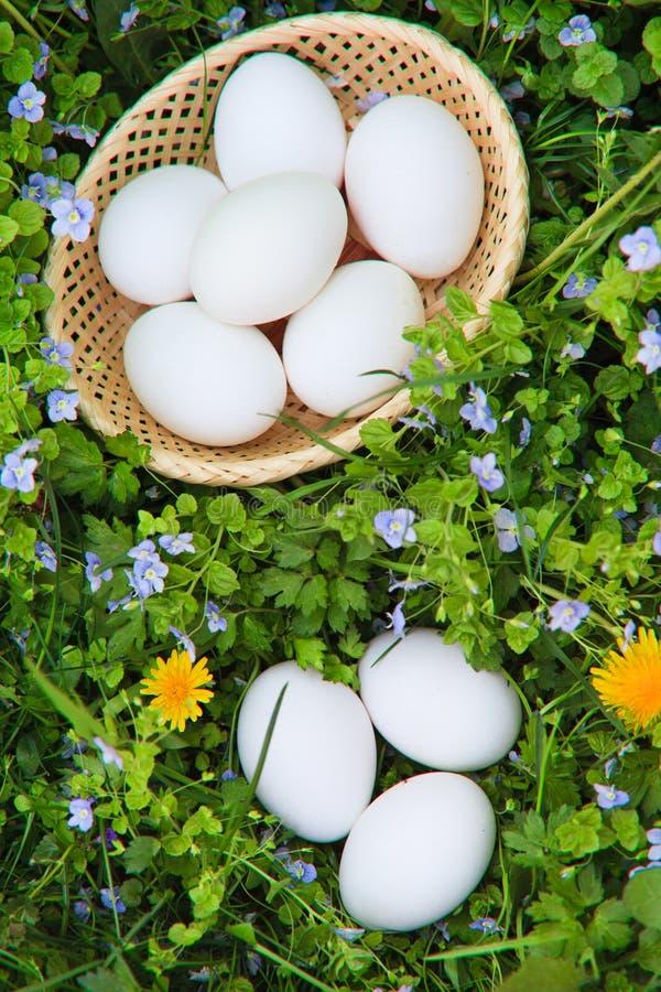 трава яичек стоковые изображения rf
