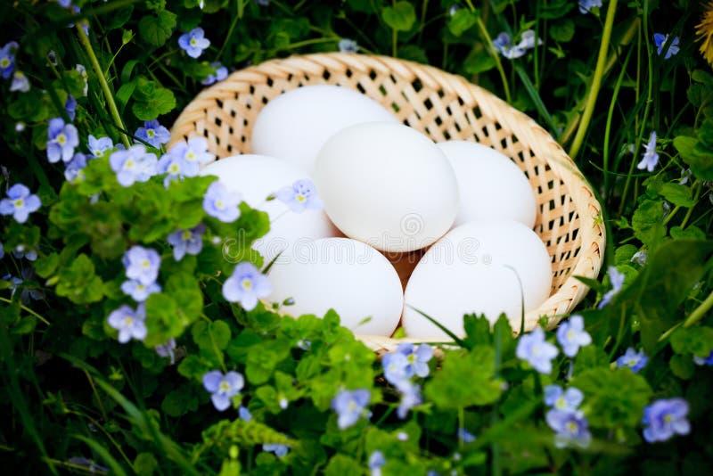 трава яичек стоковое изображение