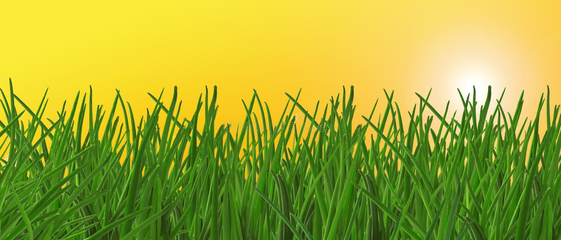 Download трава стоковое фото. изображение насчитывающей трава, green - 6862952