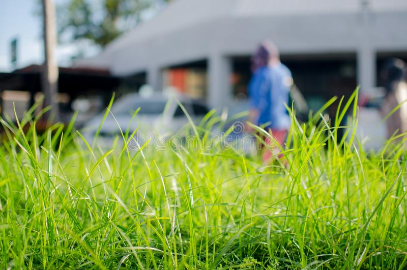 Трава BG стоковая фотография