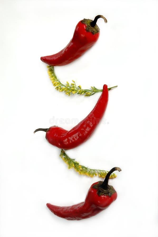 трава chili стоковая фотография rf