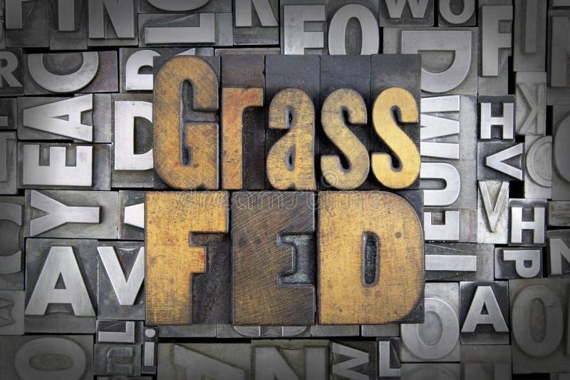 Трава Fed стоковые изображения rf
