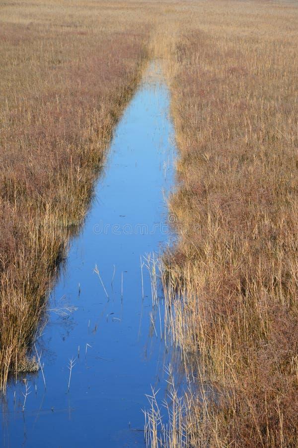 Трава Reed сценарная стоковое фото rf