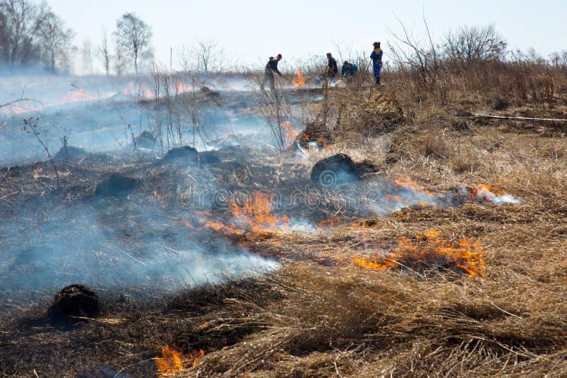 Трава t сухая горя в лесном пожаре стоковые изображения rf