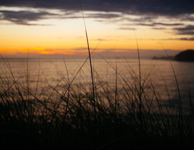 Трава Tussock пляжа во время захода солнца стоковая фотография