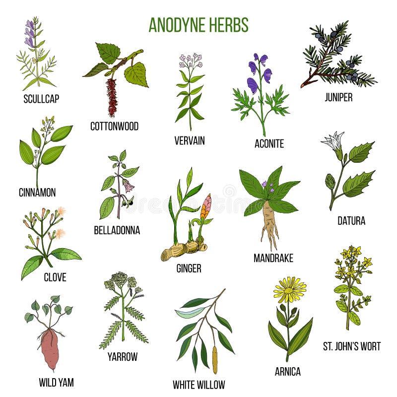 for Plantas ornamentales del ecuador