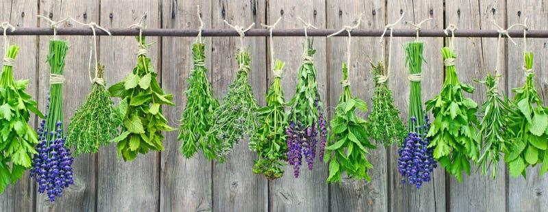 Травы вися на стене сада стоковое фото