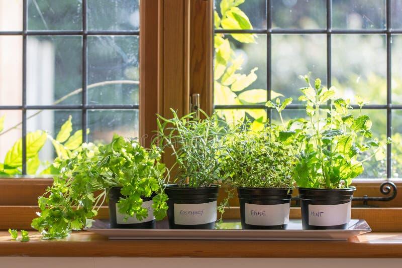 Травы в баках стоковые фото