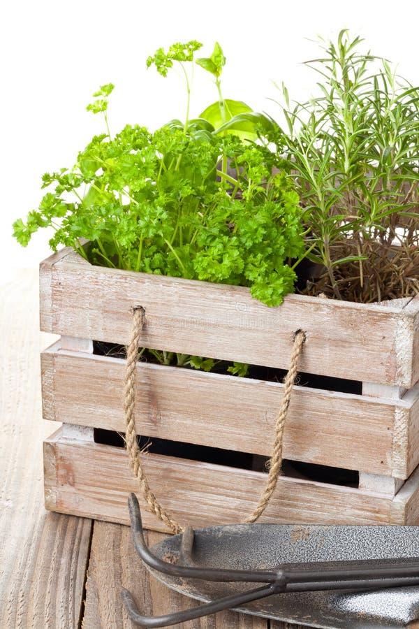 Травы в деревянной коробке стоковые фотографии rf