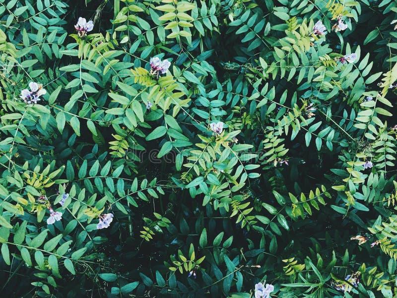 Травы глубокого лета одичалые стоковая фотография rf