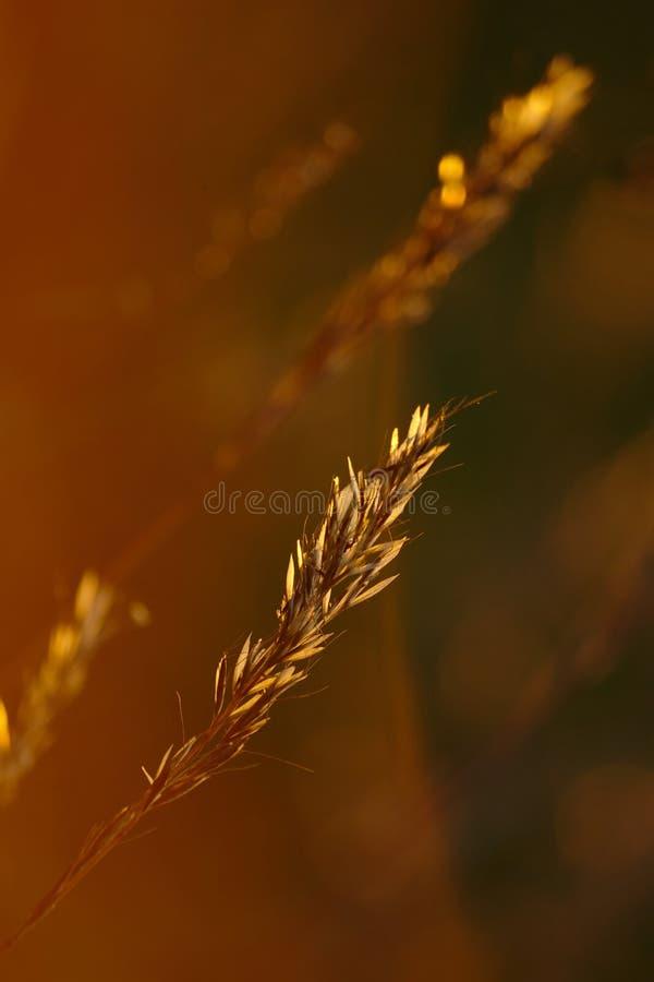 Травы лета стоковые фото