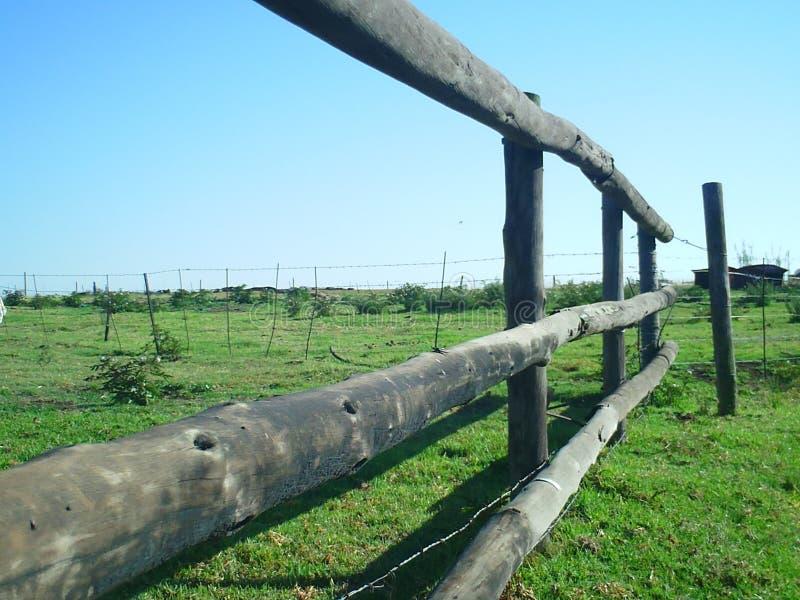 травы загородки фермы золотистые стоковое изображение rf
