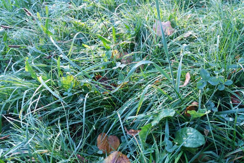 Травы и листья стоковая фотография rf