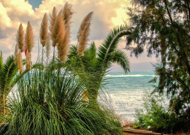 Травы и море стоковая фотография