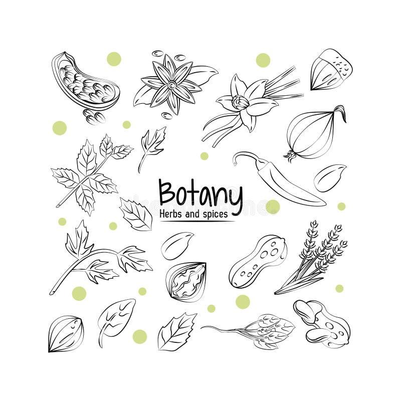 Травы и специи ботаники иллюстрация штока