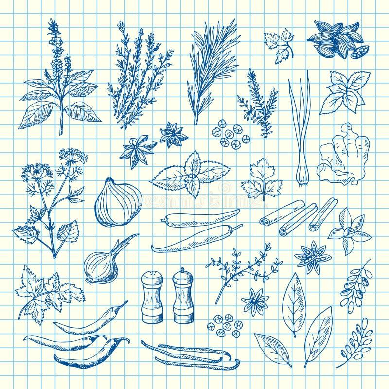 Травы и специи руки вектора вычерченные на иллюстрации листа клетки иллюстрация штока