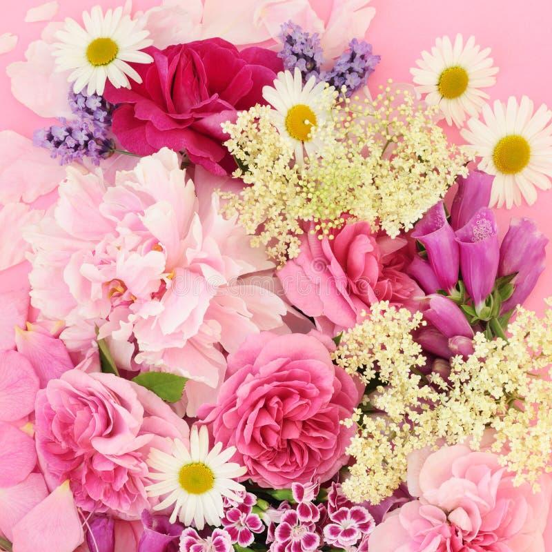 Травы и цветки лета стоковые фотографии rf