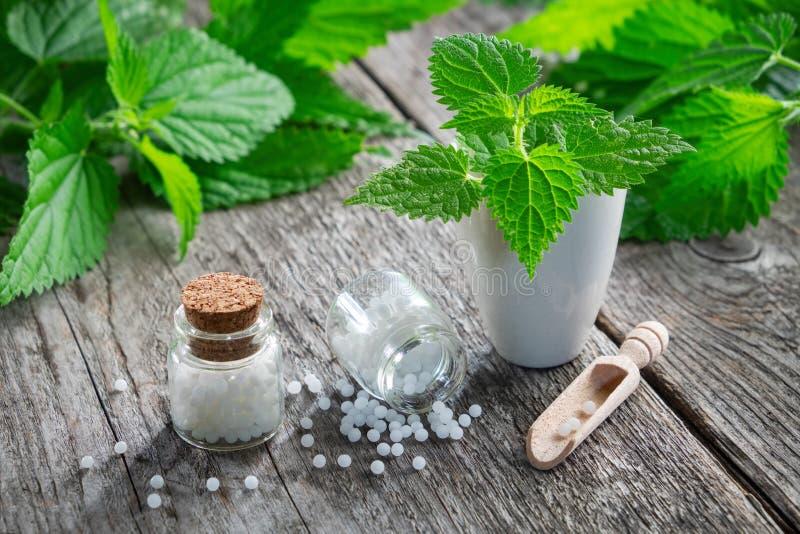 Травы, миномет и бутылки крапивы заживление гомеопатических глобул homeopathy стоковое изображение rf
