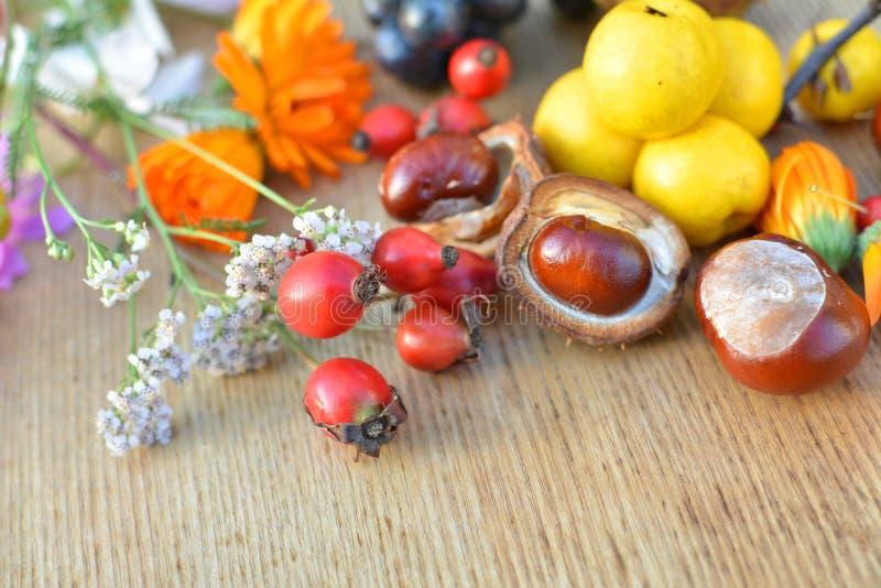 Травы, плодоовощи и конские каштаны осени стоковое изображение