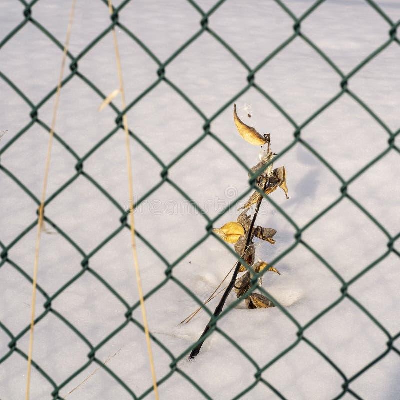 Травы поля в снеге стоковое фото rf