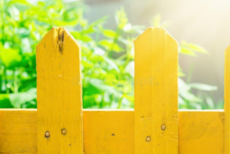 Травы растительности сада загородки планки деревянные покрашенные желтые в предпосылке Яркий золотой солнечный свет красит яркий  стоковые фото