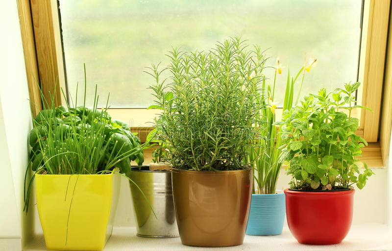 Травы растя на окне стоковое фото