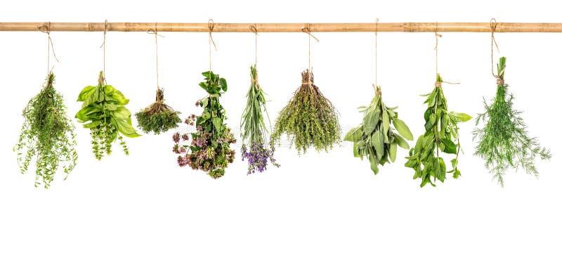 травы собрания свежие Базилик, шалфей, укроп, тимиан, мята, laven стоковые изображения rf