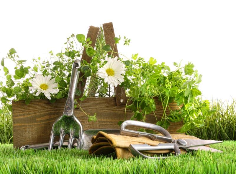 травы травы коробки свежие деревянные стоковые изображения rf